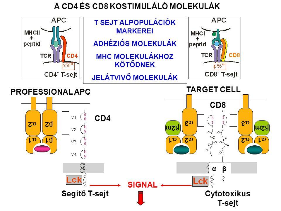 Segítő T-sejt CD4 A CD4 ÉS CD8 KOSTIMULÁLÓ MOLEKULÁK SIGNAL 22 11 22 11 PROFESSIONAL APC CD8 Cytotoxikus T-sejt α β TARGET CELL 11 33 22  2m 11 33 22 T SEJT ALPOPULÁCIÓK MARKEREI ADHÉZIÓS MOLEKULÁK MHC MOLEKULÁKHOZ KÖTŐDNEK JELÁTVIVŐ MOLEKULÁK