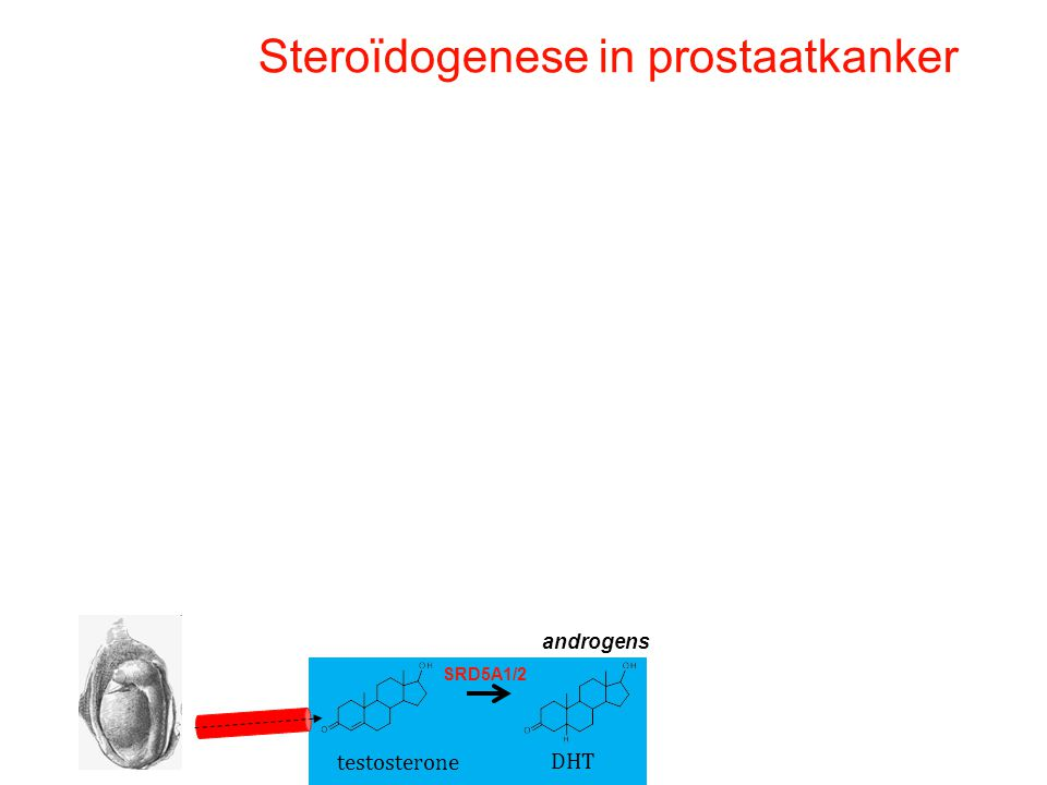 testosterone DHT SRD5A1/2 androgens Steroïdogenese in prostaatkanker
