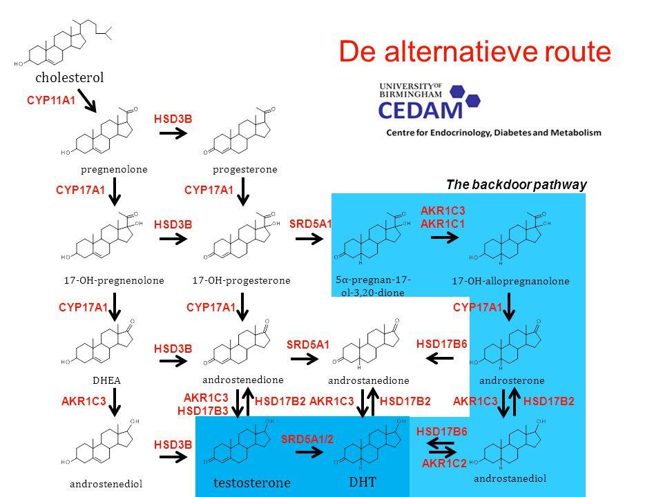 CYP11A1 cholesterol pregnenolone 17-OH-pregnenolone progesterone 17-OH-progesterone androstenedione DHEA testosterone DHT CYP17A1 HSD3B SRD5A1 CYP17A1