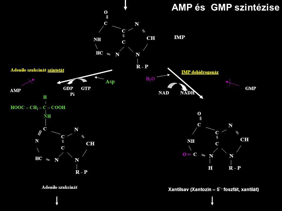 AMP és GMP szintézise N N N CH = = R - P C NH O ═ C C HC ═ IMP N N N CH = = R - P C N NH C C HC ═ N N N CH = = H R - P C NH O ═ C C O ═ C ═ HOOC – CH
