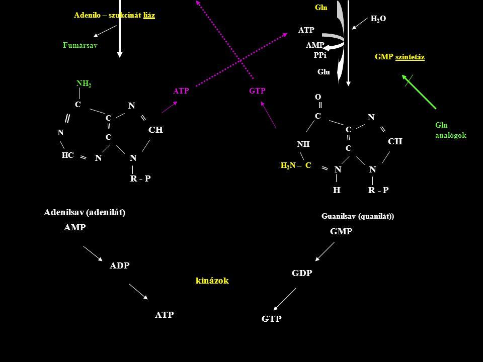 Adenilo – szukcinát liáz Fumársav N N N CH = = R - P C N NH 2 C C HC ═ Adenilsav (adenilát) AMP ADP ATP N N N CH = = H R - P C NH O ═ C C H 2 N – C ═
