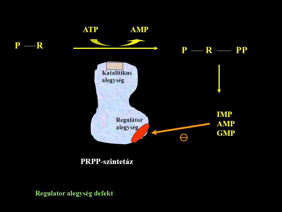 P R ATP AMP P R PP IMP AMP GMP Katalitikus alegység Regulátor alegység PRPP-szintetáz  Regulator alegység defekt