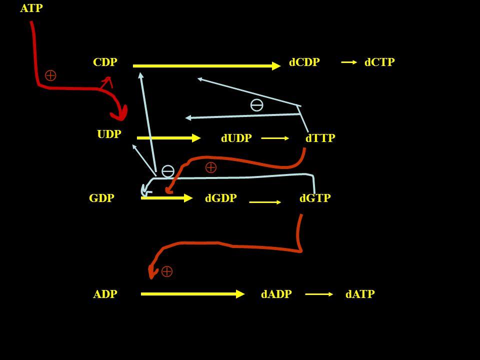  dCDP dCTP dUDP dTTP dGDP dGTP dADP dATP CDP UDP GDP ADP ATP    
