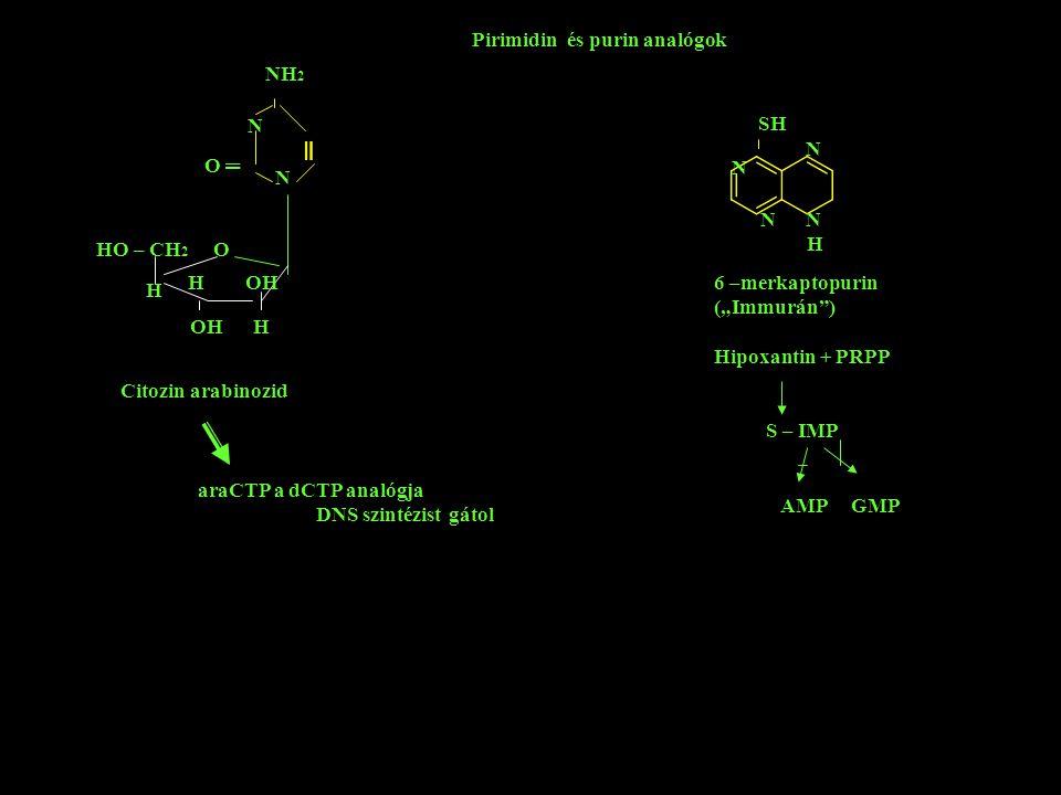 "N N NH 2 HO – CH 2 O OH H H H OH O ═ Pirimidin és purin analógok N N H SH N 6 –merkaptopurin (""Immurán"") Hipoxantin + PRPP S – IMP AMP GMP Citozin ara"