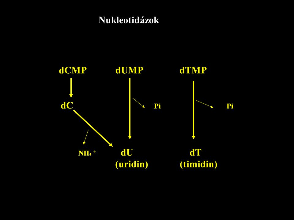 Nukleotidázok dCMP dUMP dTMP dC Pi Pi NH 4 + dU dT (uridin) (timidin)