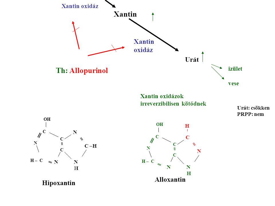 Xantin Th: Allopurinol Xantin oxidáz Urát izület vese Xantin oxidáz N N H C N = = C N OH C C H – C ═ ═ N N H N C –H = = C N OH C C H – C ═ ═ H Xantin