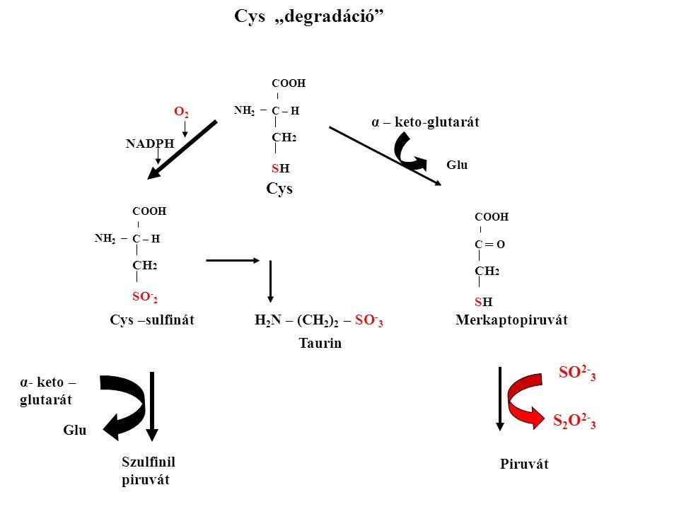 """COOH C – H CH 2 SH NH 2 Cys """"degradáció"""" Cys COOH C – H CH 2 SO - 2 NH 2 COOH C ═ O CH 2 SH O2O2 NADPH α – keto-glutarát Glu Cys –sulfinát H 2 N – (CH"""