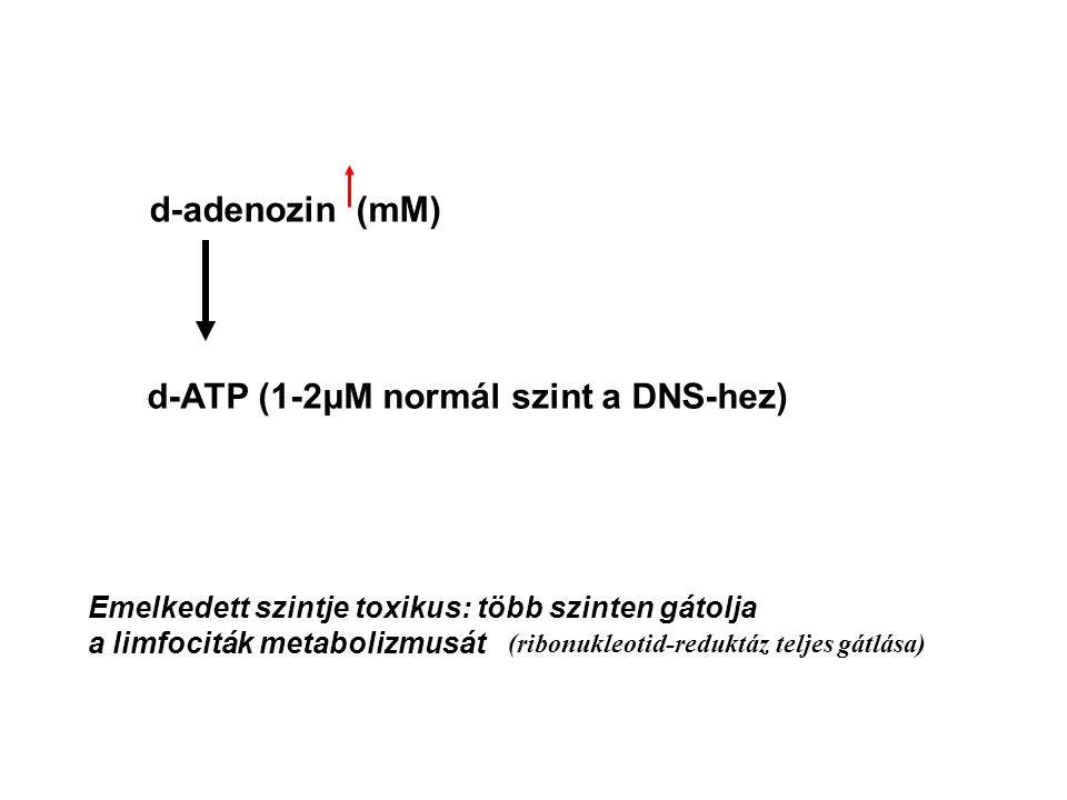 d-adenozin (mM) d-ATP (1-2μM normál szint a DNS-hez) Emelkedett szintje toxikus: több szinten gátolja a limfociták metabolizmusát (ribonukleotid-reduk