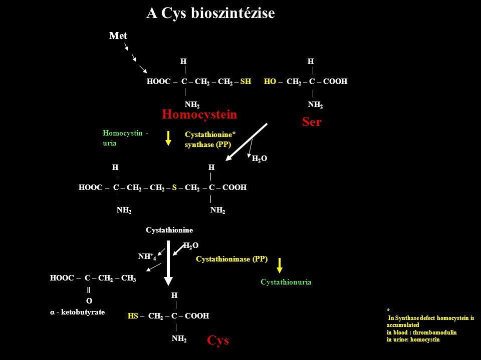 A Cys bioszintézise Met HOOC – C – CH 2 – CH 2 – SH H NH 2 Homocystein Homocystin - uria Cystathionine* synthase (PP) H2OH2O HOOC – C – CH 2 – CH 2 –