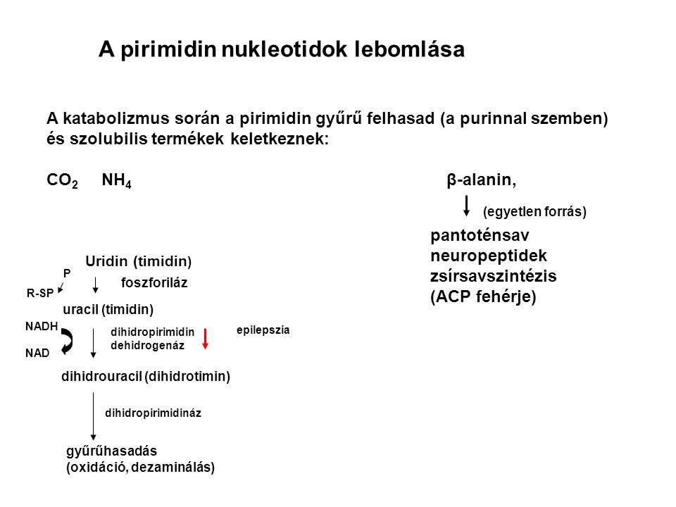 A pirimidin nukleotidok lebomlása A katabolizmus során a pirimidin gyűrű felhasad (a purinnal szemben) és szolubilis termékek keletkeznek: CO 2 NH 4 β