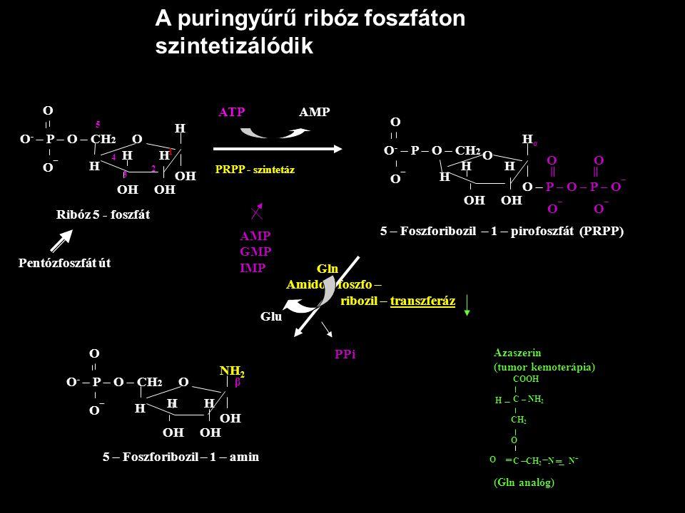 A puringyűrű ribóz foszfáton szintetizálódik O - – P – O – CH 2 O O O¯O¯ OH OH 5 4 3 2 1 H OH O - – P – O – CH 2 O O¯O¯ OH OH H α O – P – O – P – O ¯