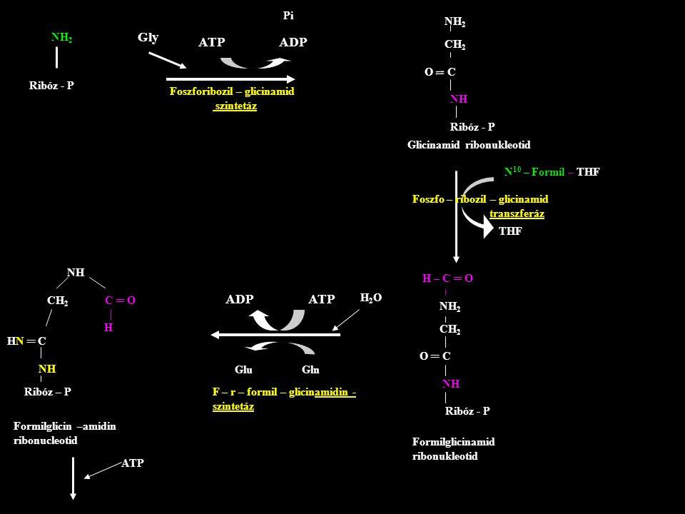 NH 2 Ribóz - P ATP ADP Gly Foszforibozil – glicinamid szintetáz Pi NH 2 CH 2 O C NH Ribóz - P ═ Glicinamid ribonukleotid H – C ═ O NH 2 CH 2 O ═ C NH