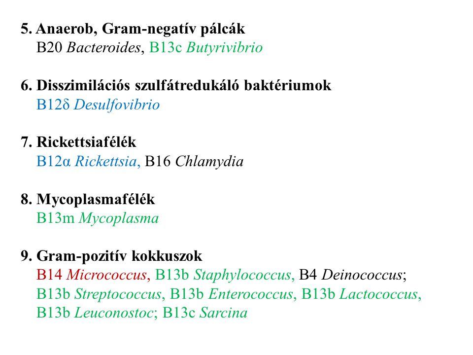 5. Anaerob, Gram-negatív pálcák B20 Bacteroides, B13c Butyrivibrio 6. Disszimilációs szulfátredukáló baktériumok B12δ Desulfovibrio 7. Rickettsiafélék
