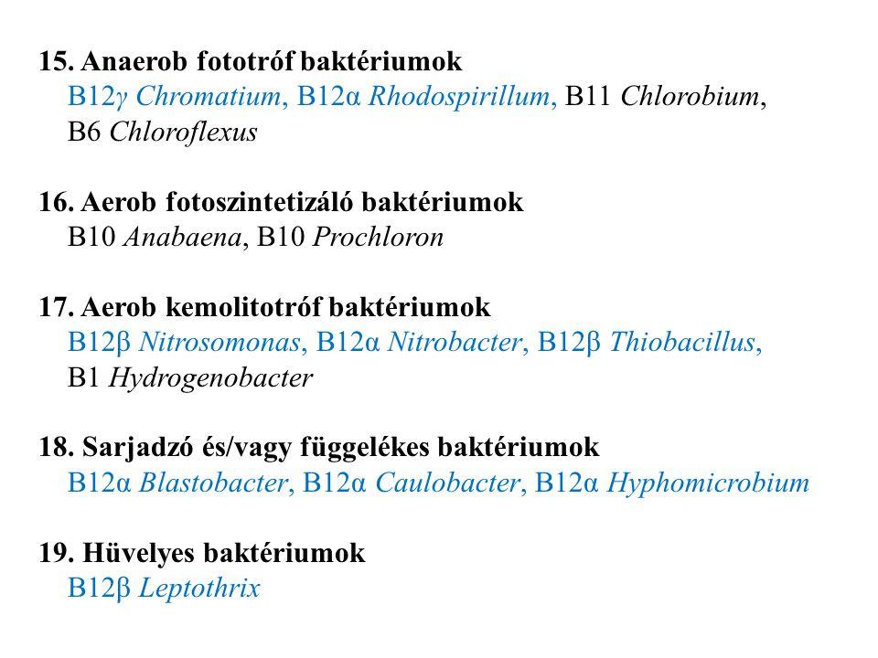 15. Anaerob fototróf baktériumok B12γ Chromatium, B12α Rhodospirillum, B11 Chlorobium, B6 Chloroflexus 16. Aerob fotoszintetizáló baktériumok B10 Anab