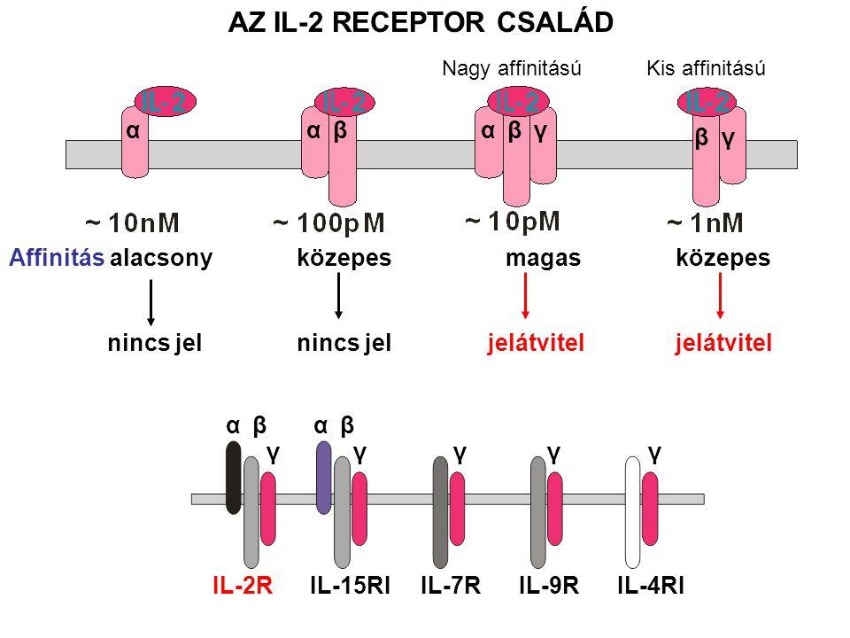 Affinitás alacsony közepes magas közepes nincs jel nincs jel jelátvitel jelátvitel ααβαβγ βγ αβ γ αβ γγγγ AZ IL-2 RECEPTOR CSALÁD IL-2R IL-15RI IL-7R IL-9R IL-4RI Kis affinitásúNagy affinitású