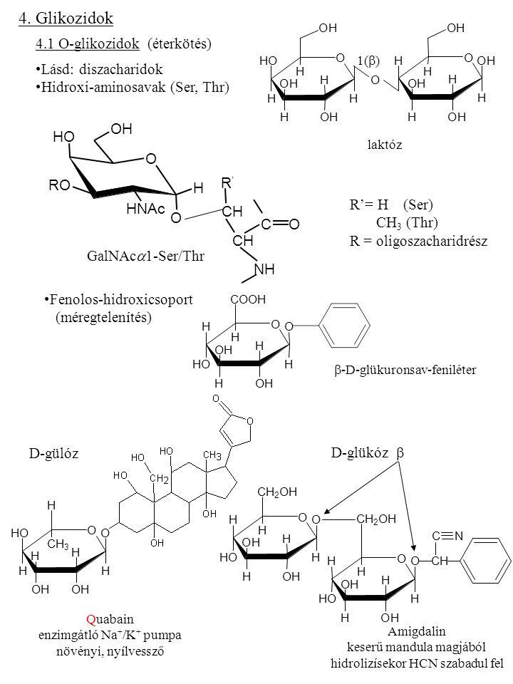 4.2 N-glikozidok Glikozil-aminok O H OH H H H H OHOH OH OH OH O H OH H H H H NH2NH2 OH OH OH  -D-glükóz  -D-glükópiranozilamin Asn (aminosav) De: Gln (nem) GlcNAc  1-Asn R: oligoszacharid rész Nukleozidok Adenozin Antibiotikumban(Streptomyces griseus) Streptomicin (1944) N-metil-glükózamin Streptóz Streptidin (ciklohexán gyűrű) -antibiotikum -protozoa ellenes 1' 4' 5' N N N N NH 2 O H H OH H OH H OH
