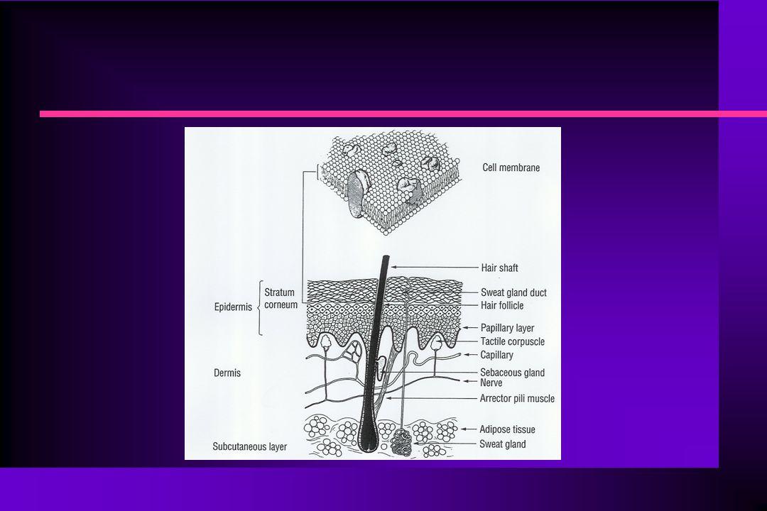Ενεργητική Μεταφορά n Παραδείγματα φαρμάκων που περνούν τις βιολογικές μεμβράνες με ενεργητική μεταφορά: n Μελφαλάνη (παράγωγο L-φαινυλαλανίνης) – μεταφέρεται στα καρκινικά κύτταρα με ενεργητική μεταφορά n Λεβοντόπα - περνά τον αιματοεγκεφαλικό φραγμό με ενεργητική μεταφορά n Προβενεκίδη - απεκκρίνεται ενεργητικά στα νεφρικά σωληνάρια (αλληλεπίδραση με πενικιλίνη)