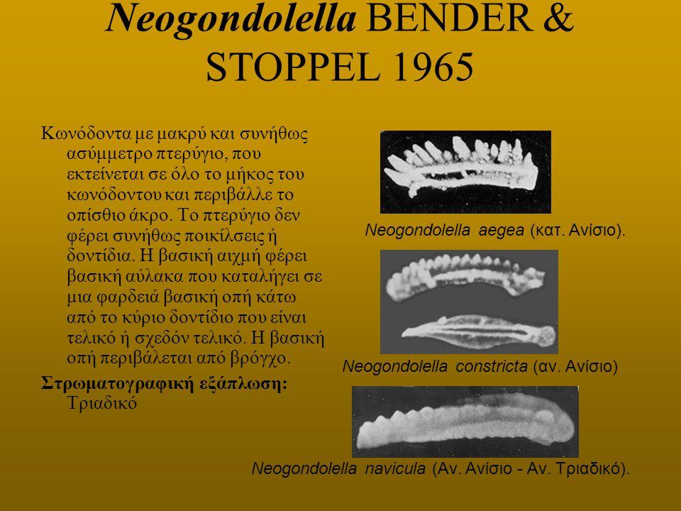 Neogondolella BENDER & STOPPEL 1965 Κωνόδοντα με μακρύ και συνήθως ασύμμετρο πτερύγιο, που εκτείνεται σε όλο το μήκος του κωνόδοντου και περιβάλλε το