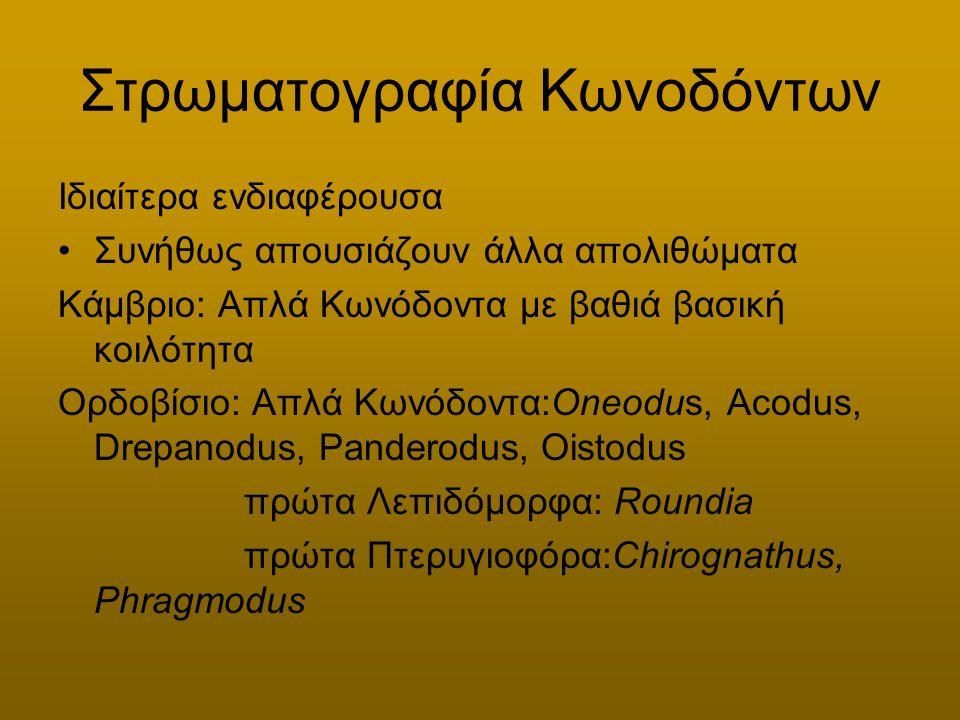 Στρωματογραφία Κωνοδόντων Ιδιαίτερα ενδιαφέρουσα Συνήθως απουσιάζουν άλλα απολιθώματα Κάμβριο: Απλά Κωνόδοντα με βαθιά βασική κοιλότητα Ορδοβίσιο: Απλ