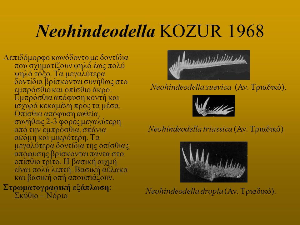Neohindeodella KOZUR 1968 Λεπιδόμορφο κωνόδοντο με δοντίδια που σχηματίζουν ψηλό έως πολύ ψηλό τόξο. Τα μεγαλύτερα δοντίδια βρίσκονται συνήθως στο εμπ