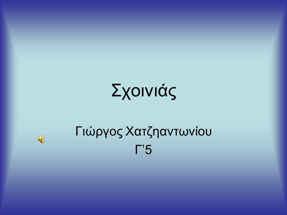 Σχοινιάς Γιώργος Χατζηαντωνίου Γ'5