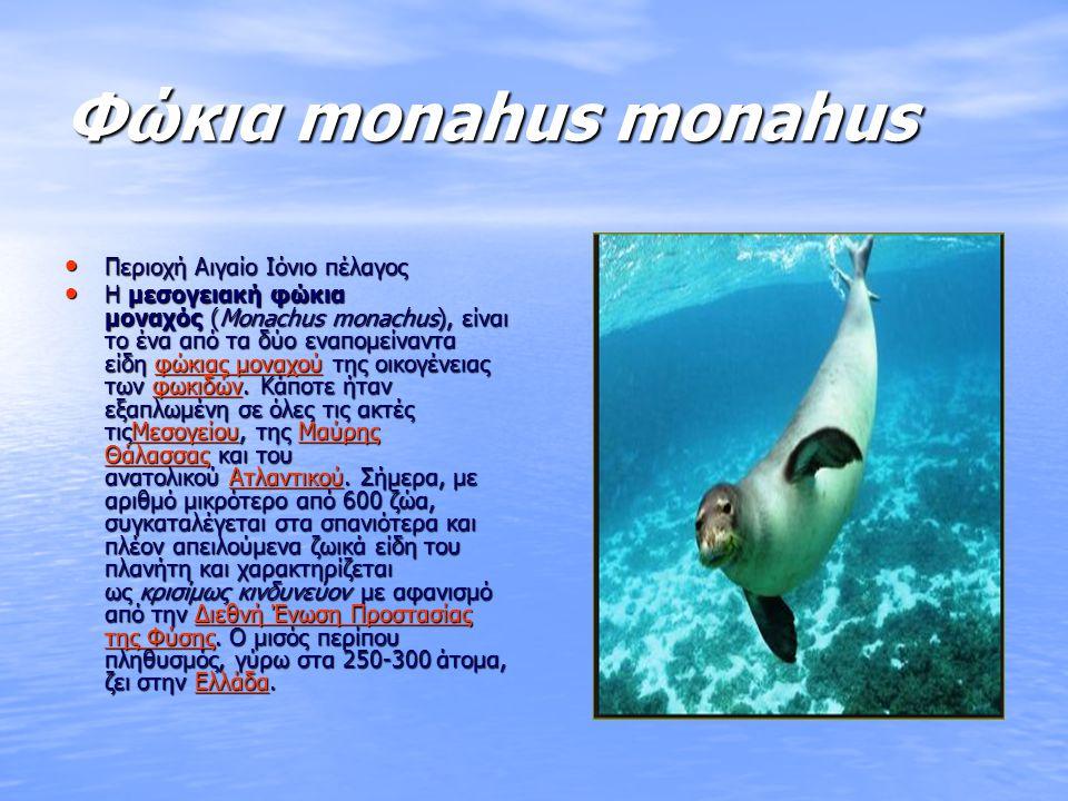 Χελώνα καρέτα καρέτα Χελώνα καρέτα καρέτα Περιοχή Ζάκυνθος Περιοχή Ζάκυνθος Η χελώνα καρέτα είναι ίσως ένα από τα πιο εμβληματικά είδη των μεσογειακών και ελληνικών θαλασσών και ένα από τα επτά είδη θαλάσσιων χελωνών που υπάρχουν στον πλανήτη.