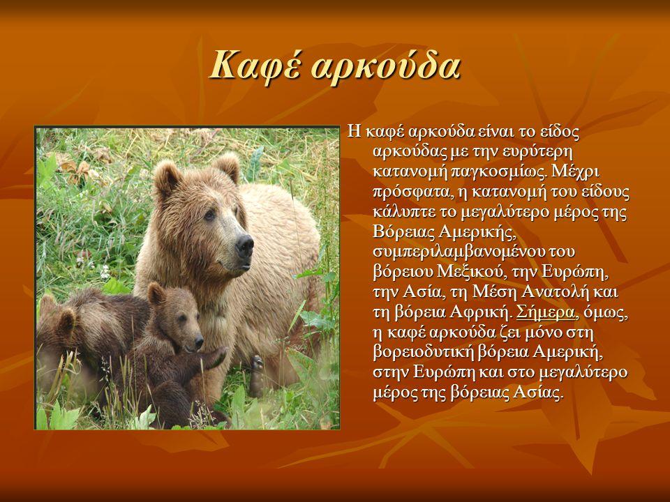 Καφέ αρκούδα Η καφέ αρκούδα είναι το είδος αρκούδας με την ευρύτερη κατανομή παγκοσμίως.