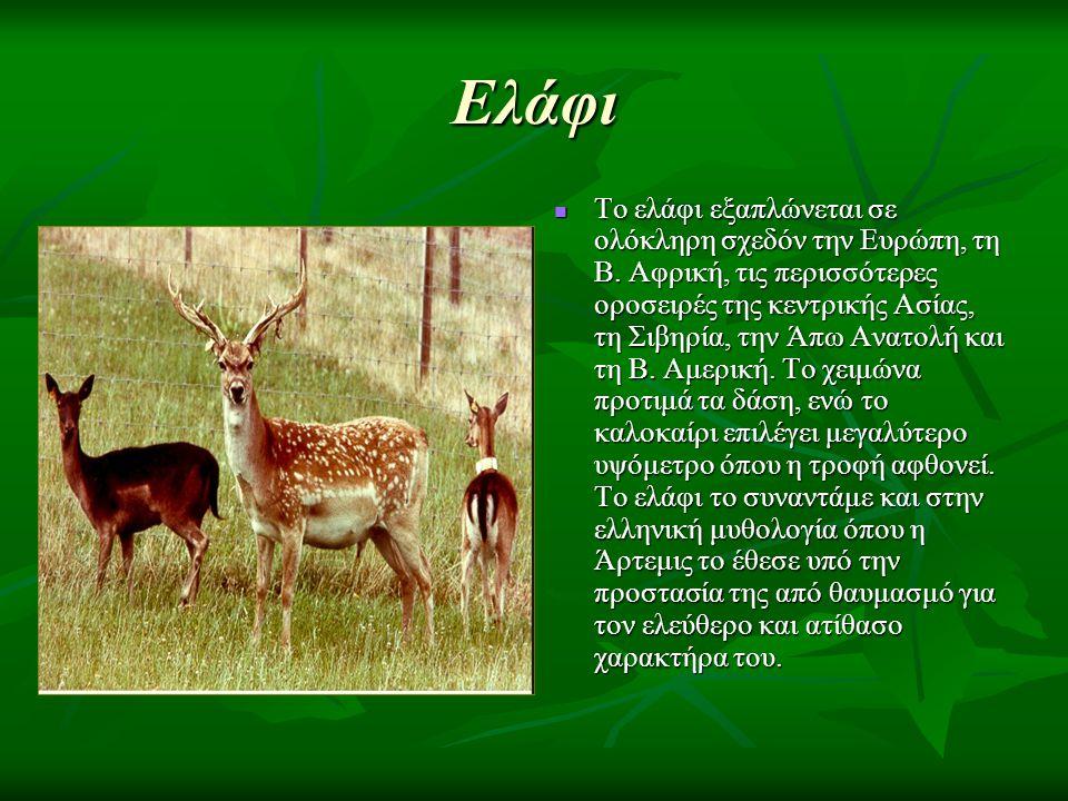 Ελάφι Το ελάφι εξαπλώνεται σε ολόκληρη σχεδόν την Ευρώπη, τη Β.