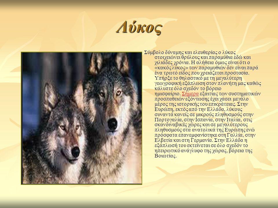 Λύκος Σύμβολο δύναμης και ελευθερίας ο λύκος στοιχειώνει θρύλους και παραμύθια εδώ και χιλιάδες χρόνια.