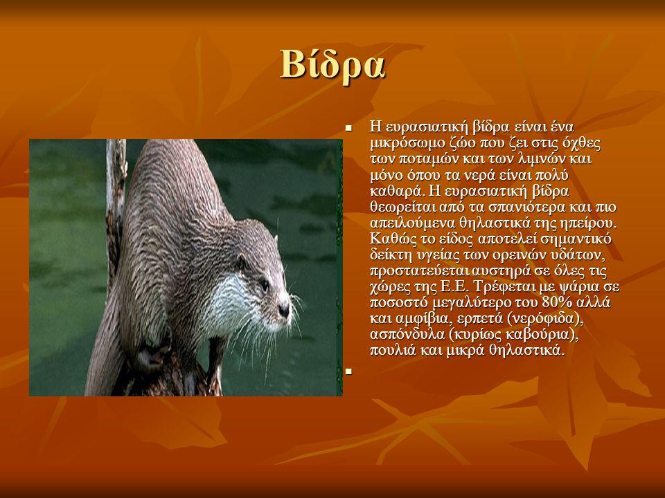 Βίδρα Η ευρασιατική βίδρα είναι ένα μικρόσωμο ζώο που ζει στις όχθες των ποταμών και των λιμνών και μόνο όπου τα νερά είναι πολύ καθαρά.