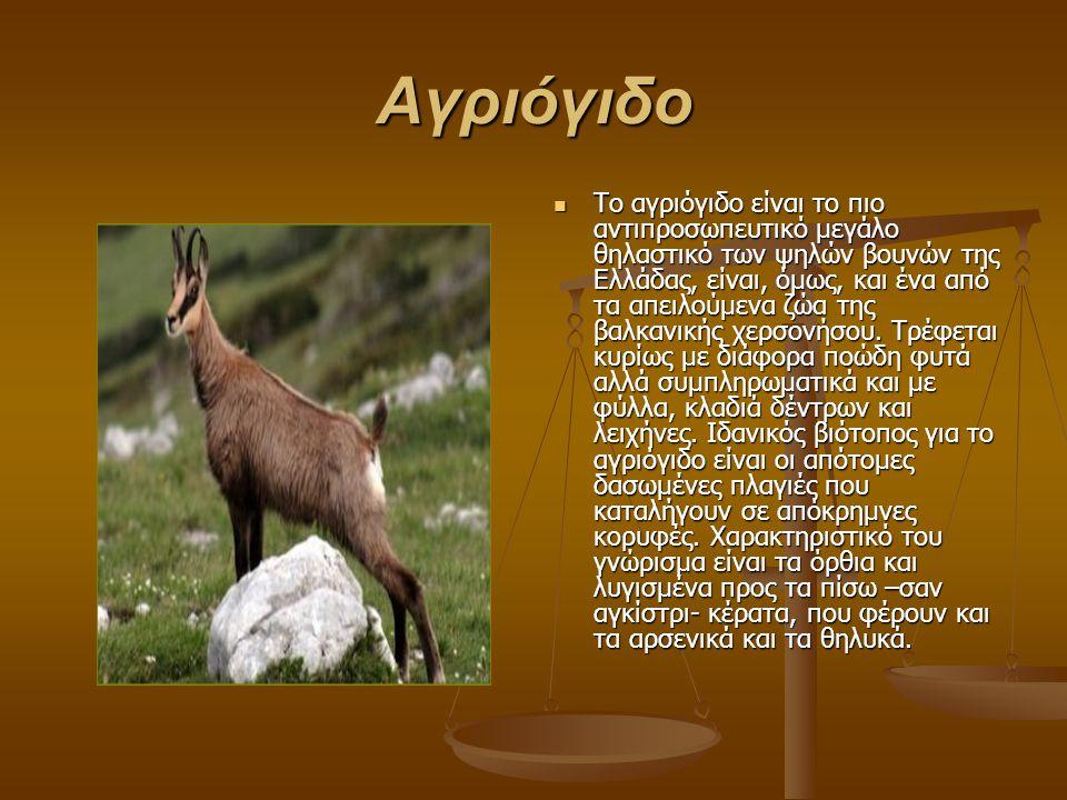 Αγριόγιδο Tο αγριόγιδο είναι το πιο αντιπροσωπευτικό μεγάλο θηλαστικό των ψηλών βουνών της Ελλάδας, είναι, όμως, και ένα από τα απειλούμενα ζώα της βαλκανικής χερσονήσου.