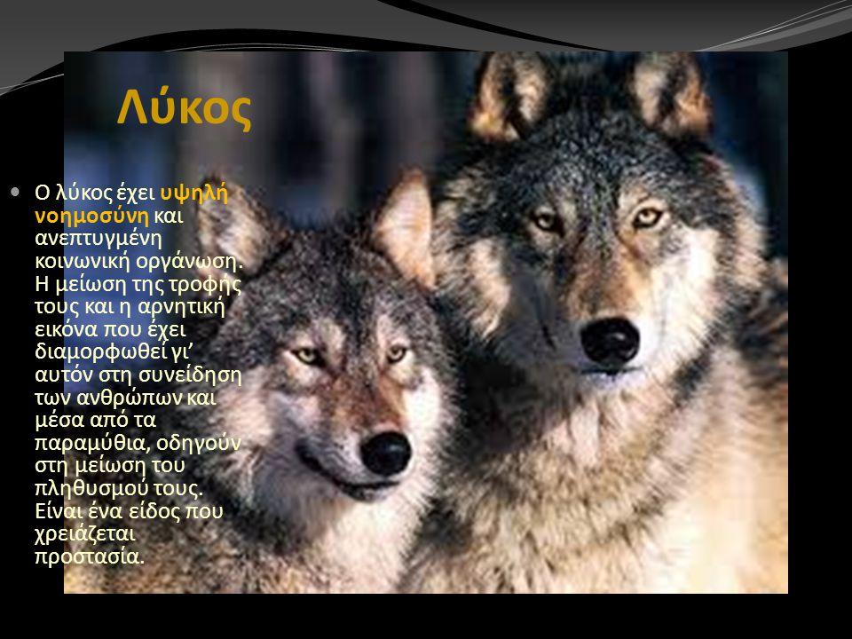 Λύκος Ο λύκος έχει υψηλή νοημοσύνη και ανεπτυγμένη κοινωνική οργάνωση. Η μείωση της τροφής τους και η αρνητική εικόνα που έχει διαμορφωθεί γι' αυτόν σ