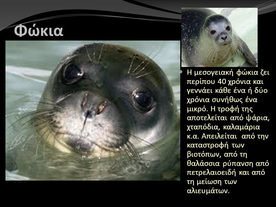Φώκια Η μεσογειακή φώκια ζει περίπου 40 χρόνια και γεννάει κάθε ένα ή δύο χρόνια συνήθως ένα μικρό. Η τροφή της αποτελείται από ψάρια, χταπόδια, καλαμ