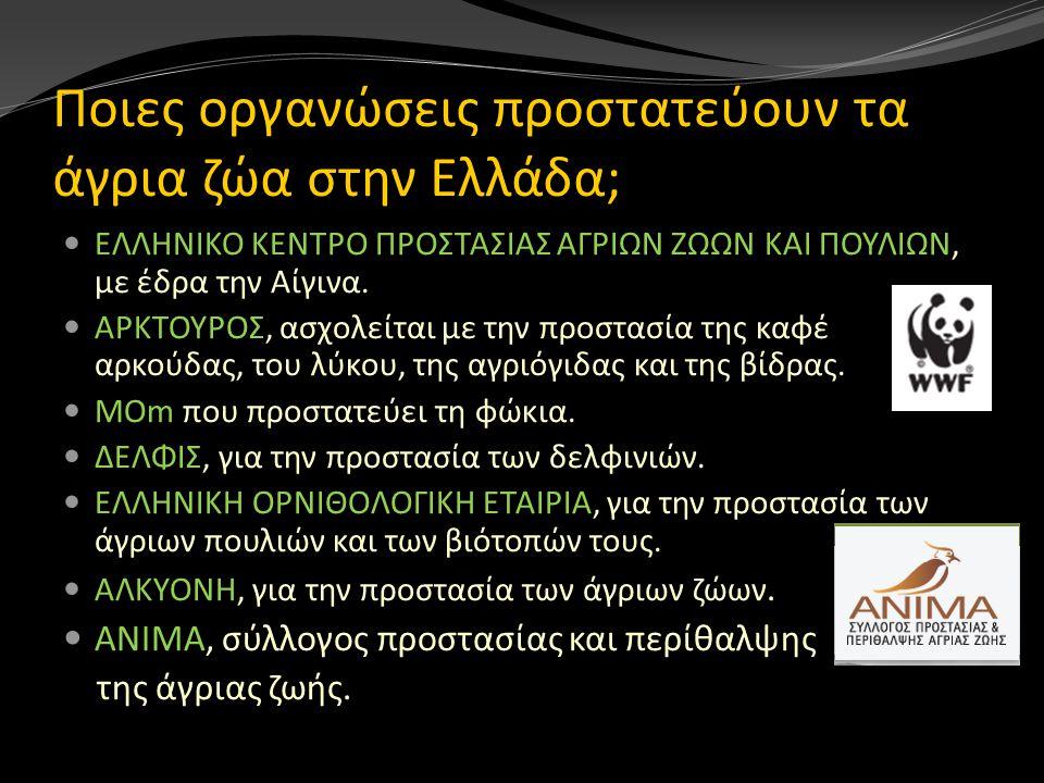 Ποιες οργανώσεις προστατεύουν τα άγρια ζώα στην Ελλάδα; ΕΛΛΗΝΙΚΟ ΚΕΝΤΡΟ ΠΡΟΣΤΑΣΙΑΣ ΑΓΡΙΩΝ ΖΩΩΝ ΚΑΙ ΠΟΥΛΙΩΝ, με έδρα την Αίγινα. ΑΡΚΤΟΥΡΟΣ, ασχολείται