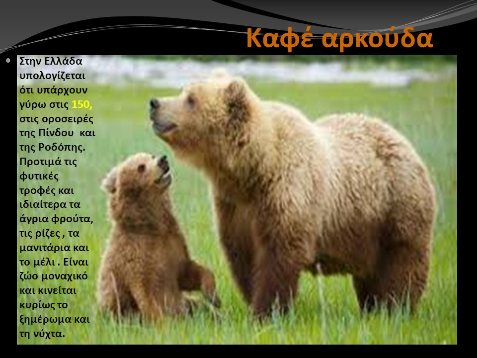 Καφέ αρκούδα Στην Ελλάδα υπολογίζεται ότι υπάρχουν γύρω στις 150, στις οροσειρές της Πίνδου και της Ροδόπης. Προτιμά τις φυτικές τροφές και ιδιαίτερα