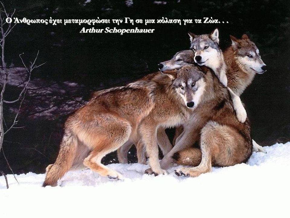 Όσο δεν έχετε ακόμα αγαπήσει ένα Ζώο, ένα μέρος της ψυχής σας θα είναι σε ύπνωση, χωρίς λάμψη... Anatole France
