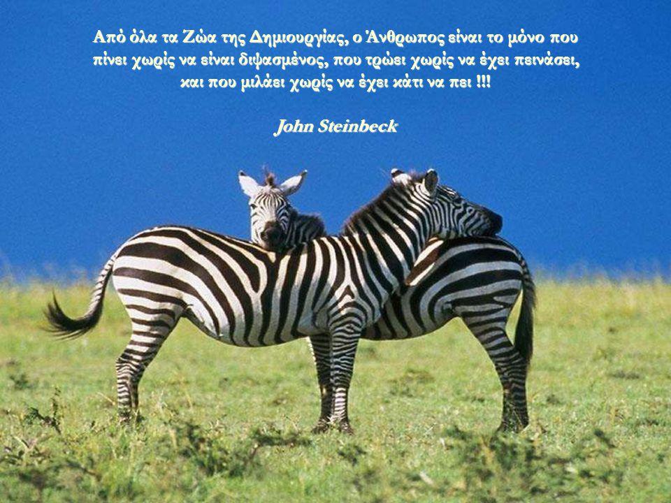 Τα Ζώα είναι πολύ καλοί Φίλοι: Δεν κάνουν ερωτήσεις και δεν ασκούν κριτική !!! George Elliot
