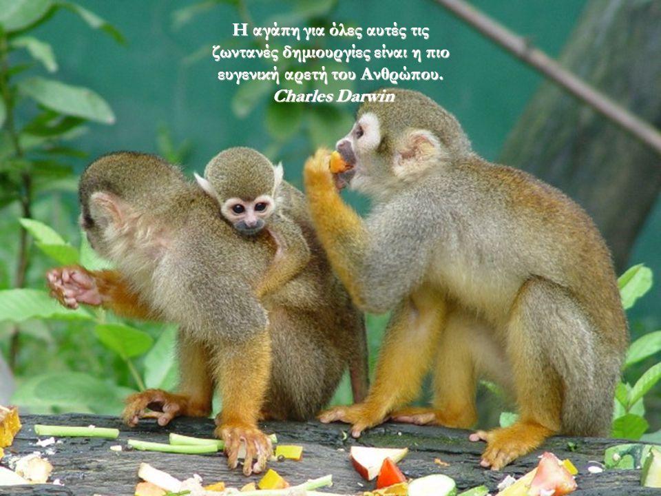 Από όλα τα Ζώα της Δημιουργίας, ο Άνθρωπος είναι το μόνο που πίνει χωρίς να είναι διψασμένος, που τρώει χωρίς να έχει πεινάσει, και που μιλάει χωρίς να έχει κάτι να πει !!.