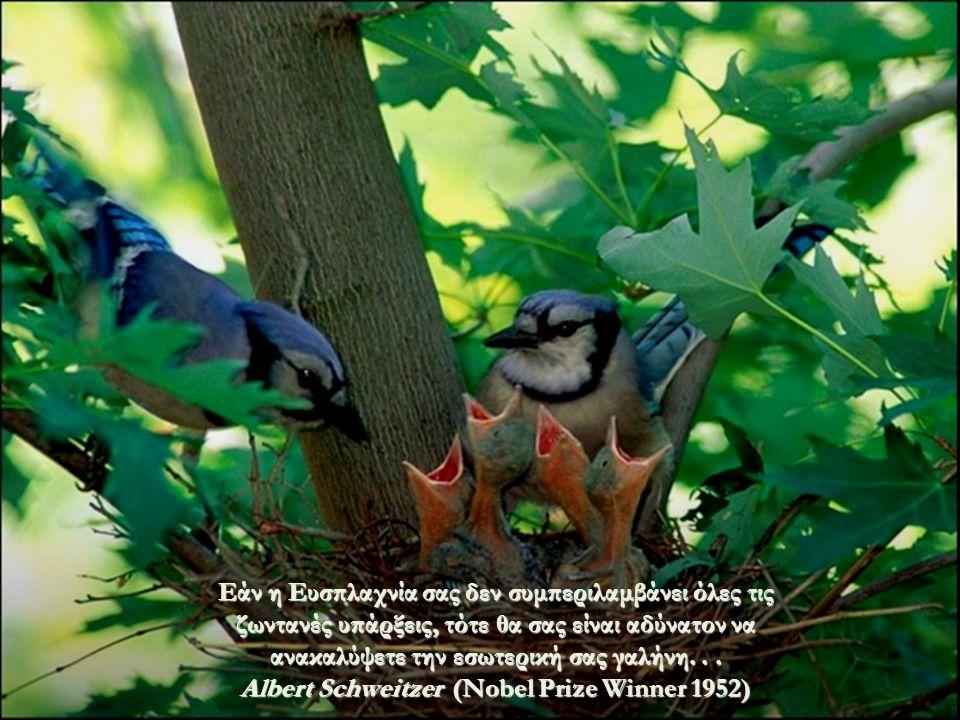 Η Ευσπλαχνία, Έχει πάντοτε την ίδια βαρύτητα όταν δυσανασχετείτε για ένα Ζώο, είτε για έναν Άνθρωπο, είτε για ένα Δένδρο. Tolstoy.