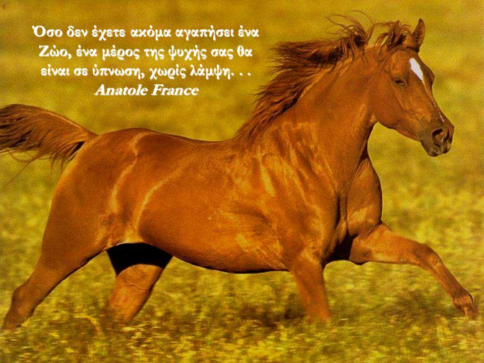 Όσο δεν έχετε ακόμα αγαπήσει ένα Ζώο, ένα μέρος της ψυχής σας θα είναι σε ύπνωση, χωρίς λάμψη...