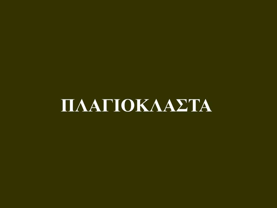 ΠΛΑΓΙΟΚΛΑΣΤΑ