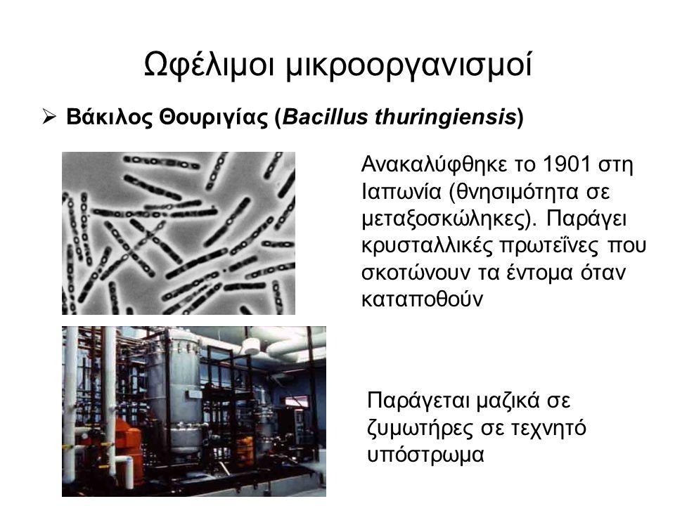 Ωφέλιμοι μικροοργανισμοί  Βάκιλος Θουριγίας (Bacillus thuringiensis) Ανακαλύφθηκε το 1901 στη Ιαπωνία (θνησιμότητα σε μεταξοσκώληκες). Παράγει κρυστα