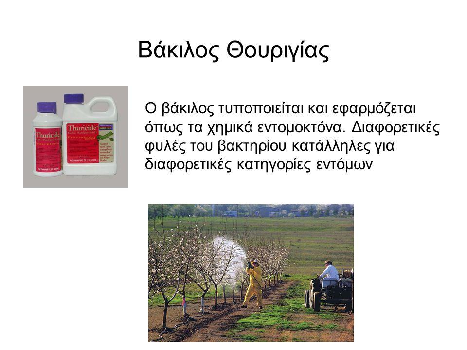 Ο βάκιλος τυποποιείται και εφαρμόζεται όπως τα χημικά εντομοκτόνα.