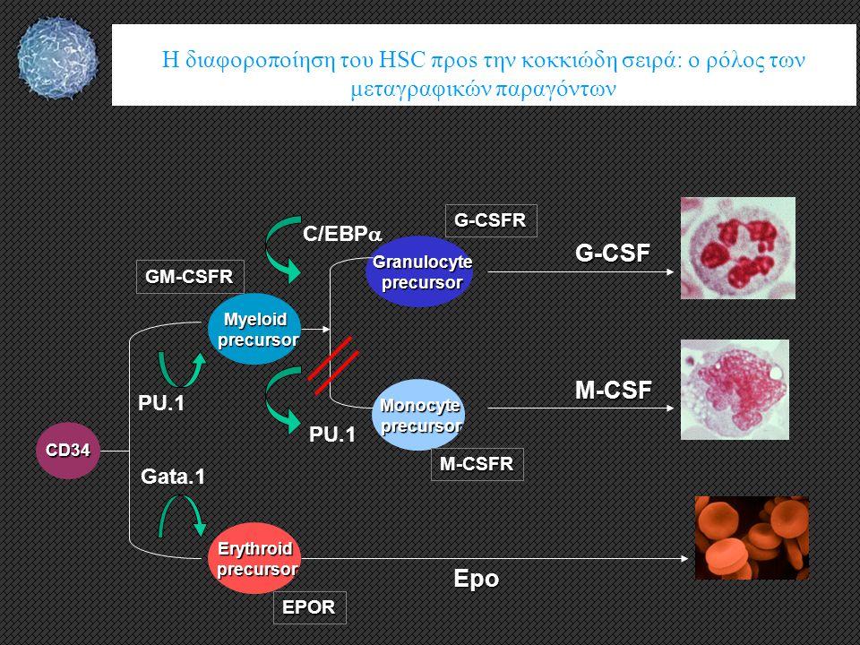 Myeloidprecursor GM-CSFR Erythroidprecursor EPOR PU.1 Gata.1 Granulocyteprecursor G-CSFR Monocyteprecursor M-CSFR PU.1 C/EBP  CD34 G-CSF M-CSF Epo H