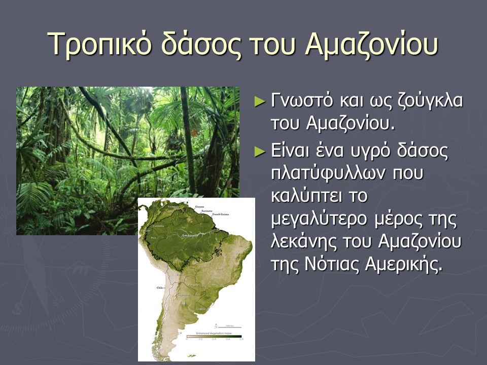 Τροπικό δάσος του Αμαζονίου ► Γνωστό και ως ζούγκλα του Αμαζονίου. ► Είναι ένα υγρό δάσος πλατύφυλλων που καλύπτει το μεγαλύτερο μέρος της λεκάνης του