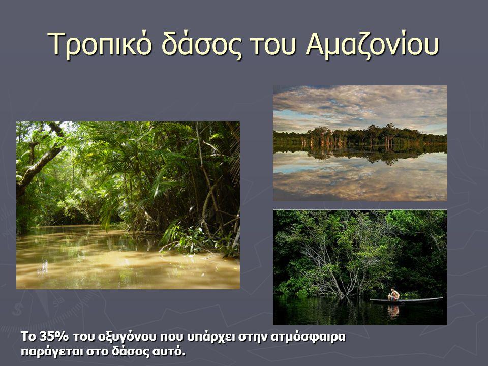 Τροπικό δάσος του Αμαζονίου Το 35% του οξυγόνου που υπάρχει στην ατμόσφαιρα παράγεται στο δάσος αυτό.