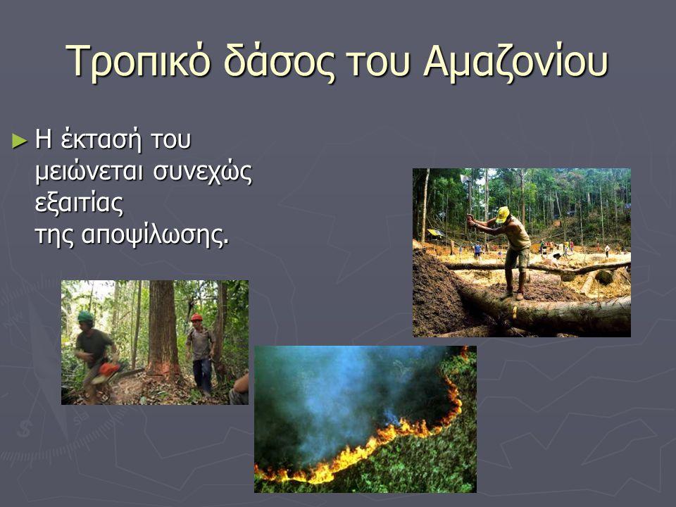 Τροπικό δάσος του Αμαζονίου ► Η έκτασή του μειώνεται συνεχώς εξαιτίας της αποψίλωσης.