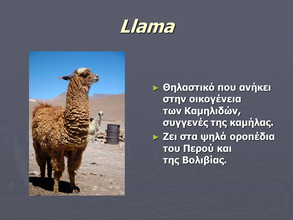 Llama ► Θηλαστικό που ανήκει στην οικογένεια των Καμηλιδών, συγγενές της καμήλας. ► Ζει στα ψηλά οροπέδια του Περού και της Βολιβίας.