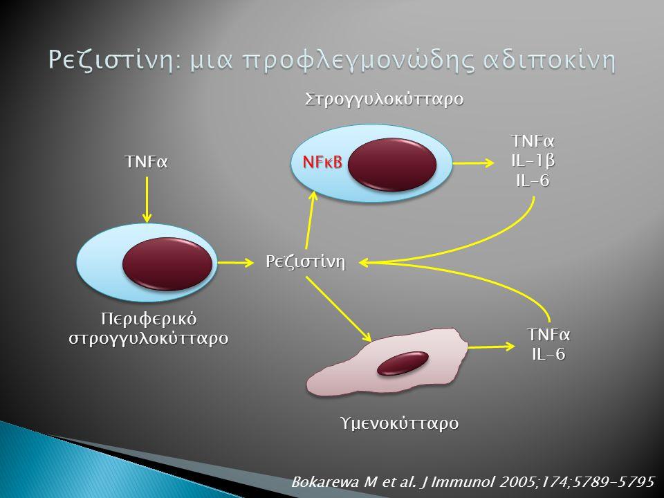 Περιφερικό στρογγυλοκύτταρο TNFα Ρεζιστίνη IL-1β IL-6 TNFα IL-6 NFκΒ Στρογγυλοκύτταρο Υμενοκύτταρο Bokarewa M et al.