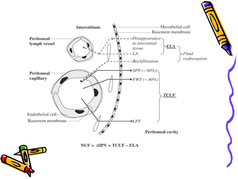 ΝΕΦΡΙΚΗ ΡΥΘΜΙΣΗ Κ + ΣΤΗ ΧΝΝ Σε φυσιολογικά άτομα η ημερήσια πρόσληψη Κ + είναι 90 mEq, από τα οποία απορροφάται το 90% και ένα ανάλογο ποσό αποβάλλεται από τα ούρα Το Κ +, το κύριο ενδοκυττάριο κατιόν, σε έναν υγιή ενήλικα ανευρίσκεται σε ποσότητα 3700 mmol.